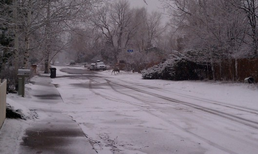 Snowy Street in Boulder co