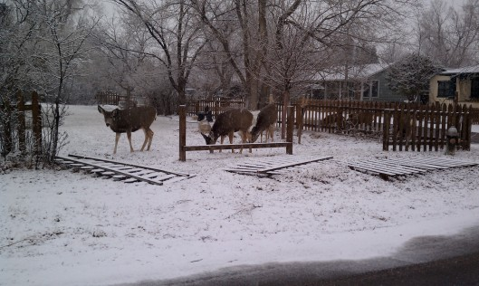 Deer in the snow in Boulder