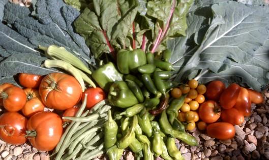 Photo of Todos Ranch Garden Vegetables, Chris and Spice Jones