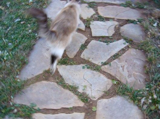 Linus The Cat