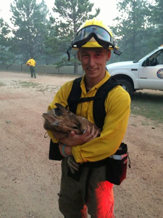 Baby deer rescued from Black Forrest Fire